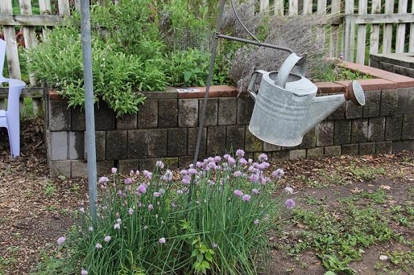 Community Garden and Peace Garden